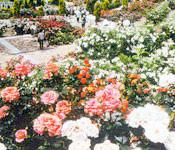 可児市 花フェスタ記念公園